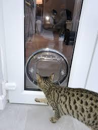 new cat flap christchurch