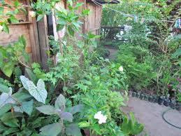 interview sylvianne a plant nursery owner to interestingly sylvianne never collects plants from the wild instead she takes clippings from plants already in people s yards their permission and