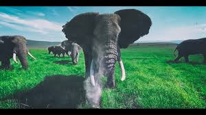 Surrounded by Wild Elephants in <b>4k 360</b> - YouTube