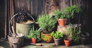 container garden vegetables. Container Garden Vegetables R