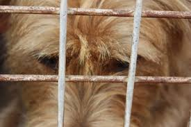 welded wire is an affordable choice for an inexpensive dog kennel