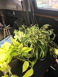 Lowes Psa Psa Lowes Has Amazing Plants Back Now This Is Ypsi Michigan