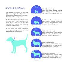 Master Confetti Leather Dog Collar