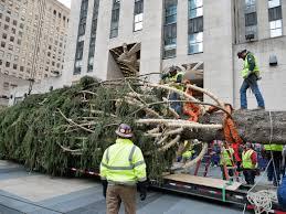 Rockefeller Christmas tree arrives from ...