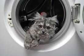 Gefahren Für Katzen Im Haushalt Shop Apothekecom Blog