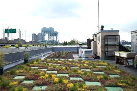 5 borough building green roof nyc parks department inhabitat green design innovation architecture green building