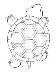 Small Picture Coloring Pages Simple Turtle Drawings Ninja Of Maxvision