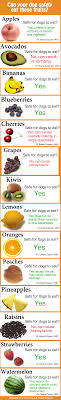 What Can Dogs Eat Chart Foods Dogs Cant Eat Chart Goldenacresdogs Com