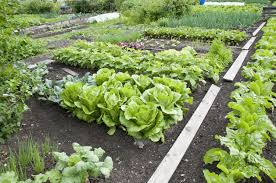 Vegetable Planting Chart Ontario Vegetables For Zone 5 Gardens Tips On Growing Vegetables In