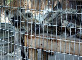 Should animals be kept in zoos essay writing Linden Ridge Concrete zoo