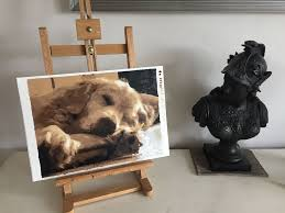 nearly finished golden retriever paint by numbers