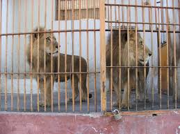 zoo animals in cages. Wonderful Animals The Zoo Cairo Egypt UPDATED 2018 Top Tips Before You Go With Photos   TripAdvisor Throughout Animals In Cages E