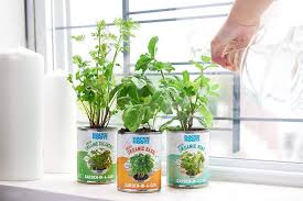 back to the roots garden in a can kitchen herb garden