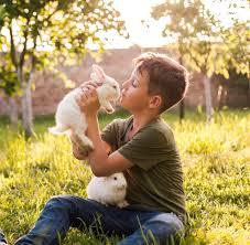 cute boy holding rabbit