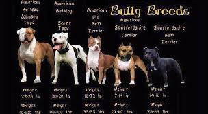 do you know your bully breeds