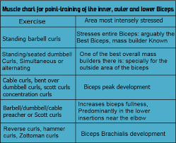 Biceps Exercise Chart Biceps Workout Routine