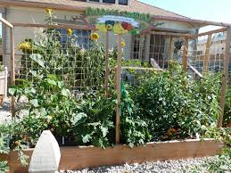 plan ahead vegetable gardening in small spaces