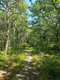 Best trails in West Barnstable Conservation Area, Massachusetts | AllTrails