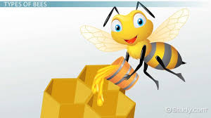 Life Cycle Of A Bee Lesson For Kids