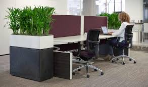 Interior office plants Draping Indoor Office Plants At The End Of Work Desks In White And Black Textured Planters Wordpresscom Office Plant Hire Maintenance Service Phs Greenleaf