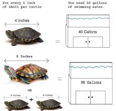 Tank Size For Your Res Pet Turtle Care Turtle Care Pet