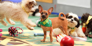 puppy bowl 2015 halftime. Wonderful Bowl The Puppy Bowlu0027s Utterly Adorable And Powerful Adoption Message  HuffPost To Bowl 2015 Halftime