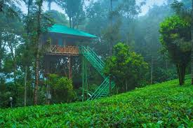 Dream Catcher Kerala Adorable DREAM CATCHER PLANTATION RESORT Munnar Kerala Hotel Reviews