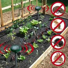 garden rodent repellent ideas family