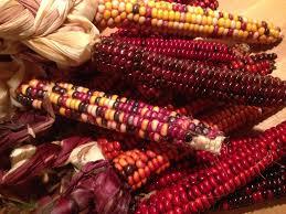 Bizarre penetrations corn cob