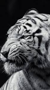 tiger iphone 6 wallpaper. Unique Iphone 750x1334 With Tiger Iphone 6 Wallpaper 2