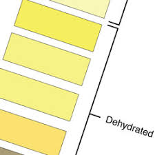 Hot Work You Need A Urine Color Chart The Safety Brief