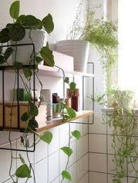 modern office plants. Plants + Shelves #office_plants #house_plants #indoor_plants #houseplants Office  Plants, House Modern