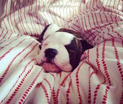 21 cute puppy pictures ody can