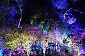 Enchanted Forest Of Lights Descanso Enchanted Forest Of Light Catherine Kim Medium