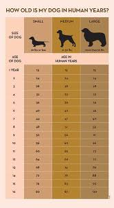 Dog Years Chart To Human Years Your Dogs Age In Human Years A Conversion Chart Dogs