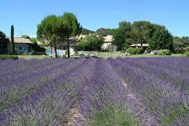 le mas de la. Le Mas De La Rose Chateaux U0026 Hotels Collection Orgon France Deals B