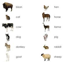 farm animals pictures. Simple Pictures Farm Animals Adults Matching  Maitri Learning With Pictures D