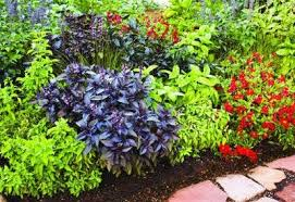 best garden plants. Herb Garden Border \u201c Best Plants