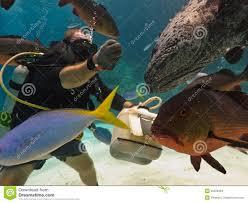 Scogliera di barriera grande di alimentazione di pesci dell