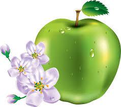 green apple transparent. green apple png image png transparent e