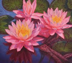 saatchi art artist fiona craig painting water lilies 3 art