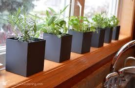 herbs growing in kitchen window