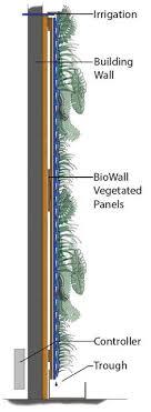 plant wall green facade
