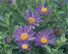 Small Picture 59 Best and Beautiful Flower Garden Ideas Beautiful flowers