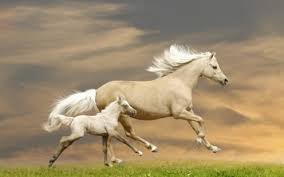 baby white horse.  Baby Baby White Horse   S For