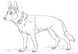 Small Picture How to draw a german shepherd dog Step by step Drawing tutorials