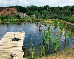Swimming Hole Pool Design The Ecological And Health Benefits Of Natural Swimming Pools