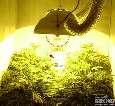 hps grow light over canopy