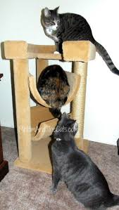 Great Cat Furniture for r Cats CozyCatFurniture