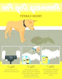 dog proof area rug pet rugs stain resistant chew waterproof carpet pad best pr